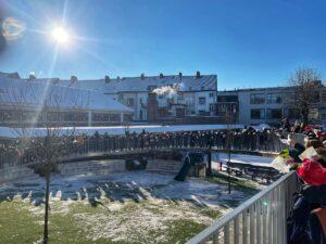 Krul - winter